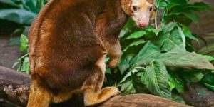 Hewan Langka di Indonesia + Dunia Terancam Punah & Aneh